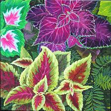 COLEUS OIL - Rakesh Sandal Industries