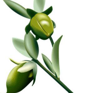JOJOBA OIL - Rakesh Sandal Industries