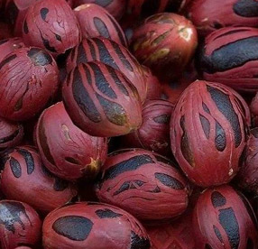 NUTMEG OLEORESIN - Rakesh Sandal Industries