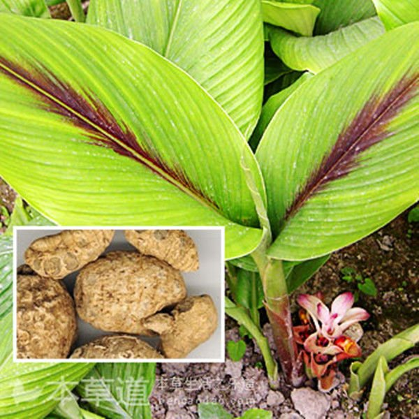CURCUMA ZADOERIA OIL - Rakesh Sandal Industries